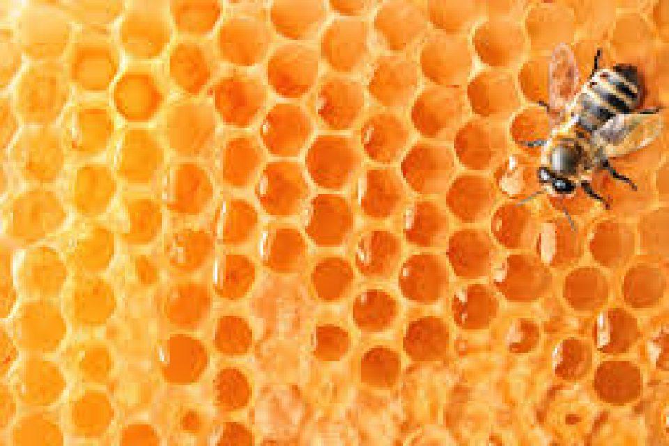 """Активисти на """"Грийнпийс"""" протестираха в Пловдив срещу опасните за пчелите пестициди"""