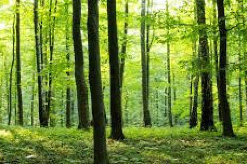 21 март е обявен за Международен ден на горите