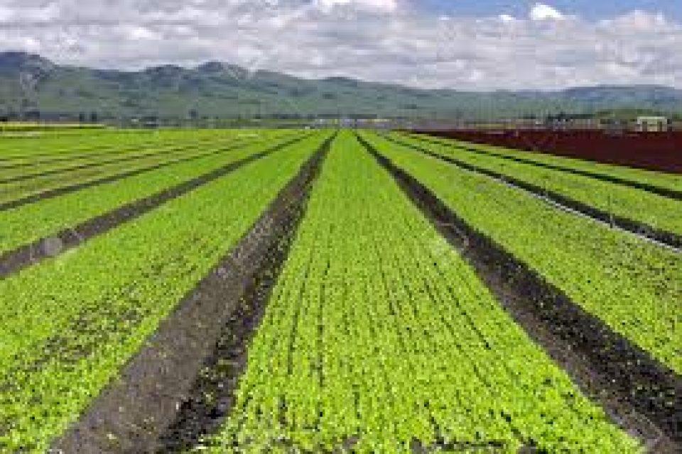 Стартира приемът за съфинансиране застраховането на земеделска продукция Стартира приемът за съфинансиране застраховането на земеделска продукция