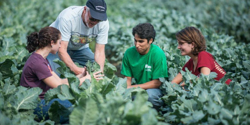"""Центърът за професионално обучение към """"Европейски алианс по образование"""" предоставя всички задължителни курсове за обучения на фермерите"""