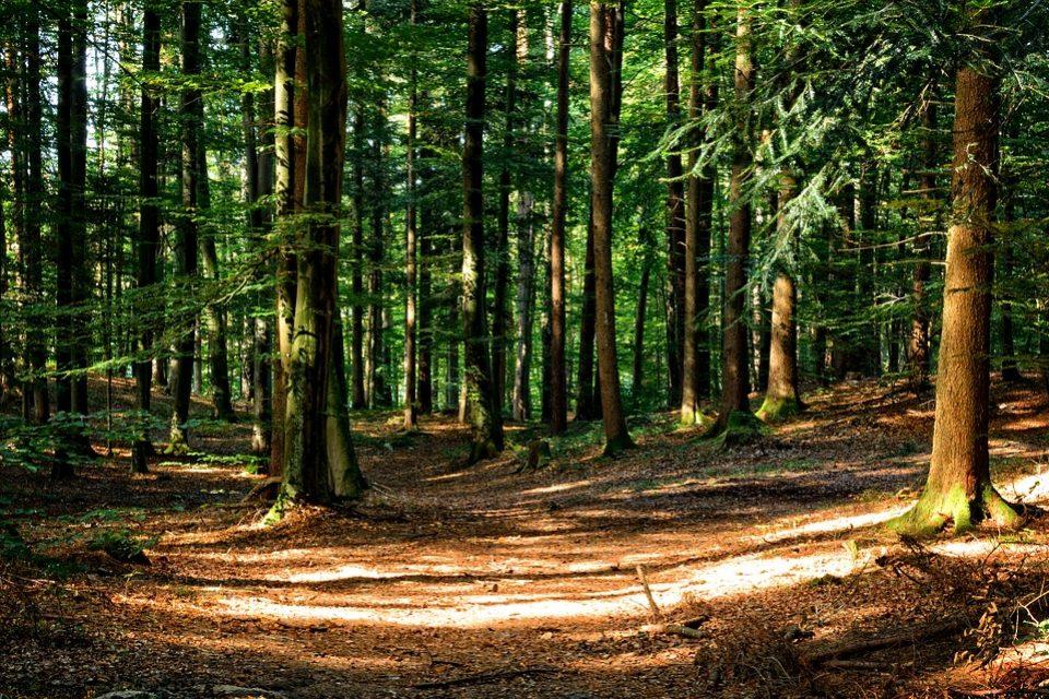 Българският национален стандарт за отговорно управление на горите е одобрен и влиза в сила на 16 август 2017