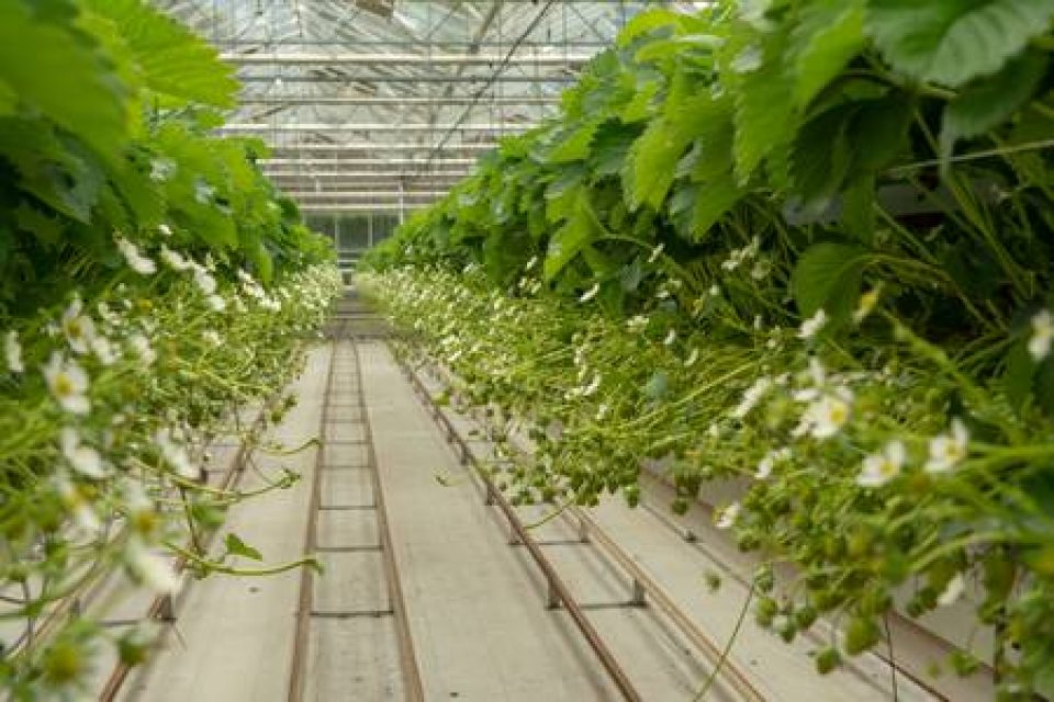 България е най-големият производител на билки и подправки в ЕС