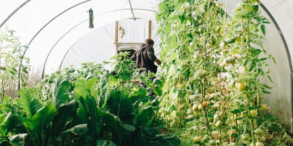 Полезни съвети при изграждане на оранжерия